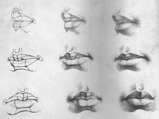 素描画的嘴 嘴的结构: 嘴依附于上下颌骨及牙齿构成的半圆柱体,形体呈