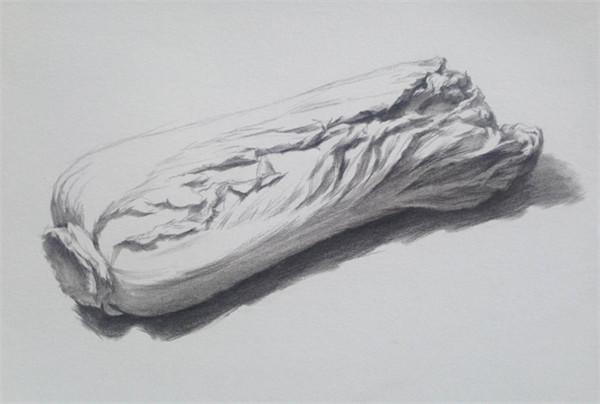 静物素描 单个静物白菜的绘画详解